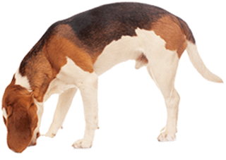 Hund frisst sein BARF-Futter aus dem Napf